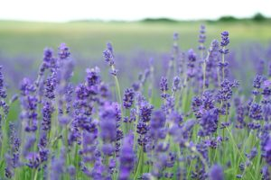 how to use essential oils for acne