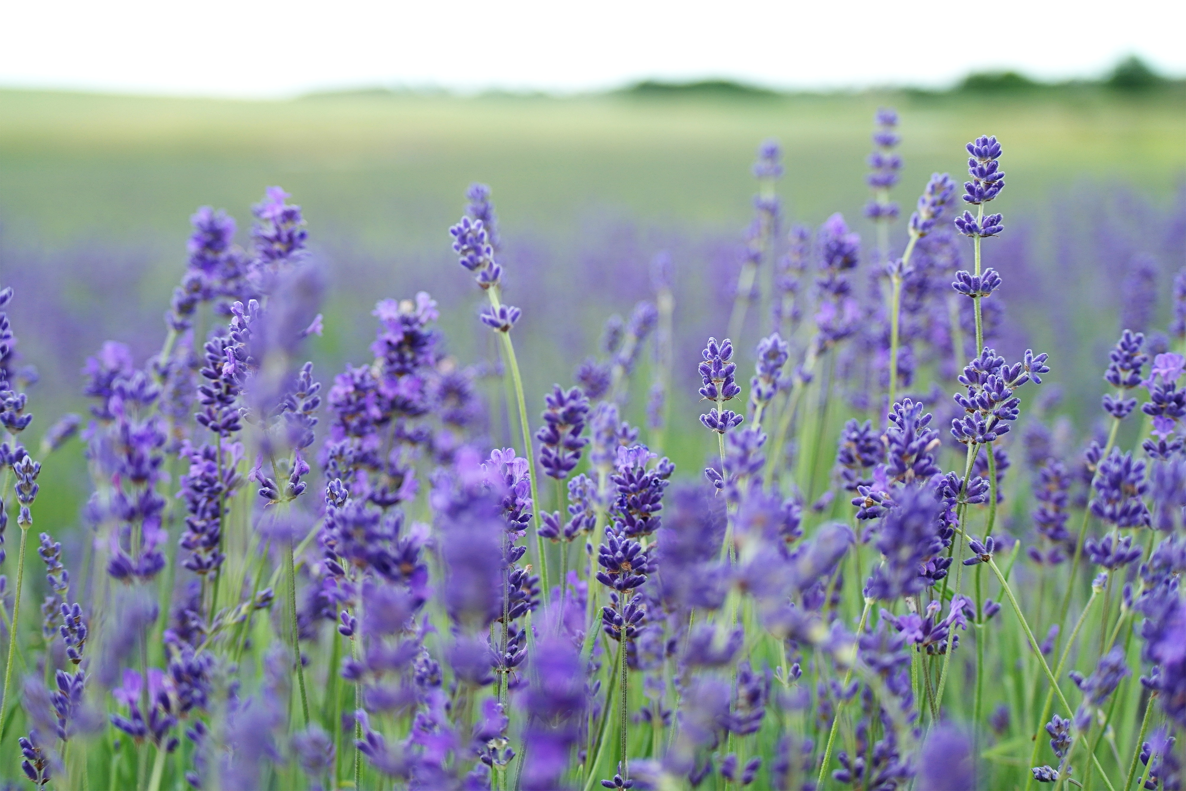 top 3 essential oils for skin care